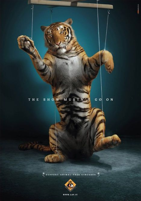 circus tiger show