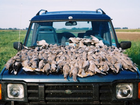 quail and doves