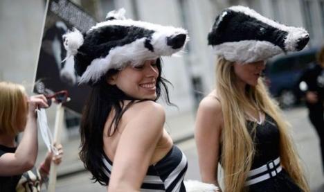 badger girls 2
