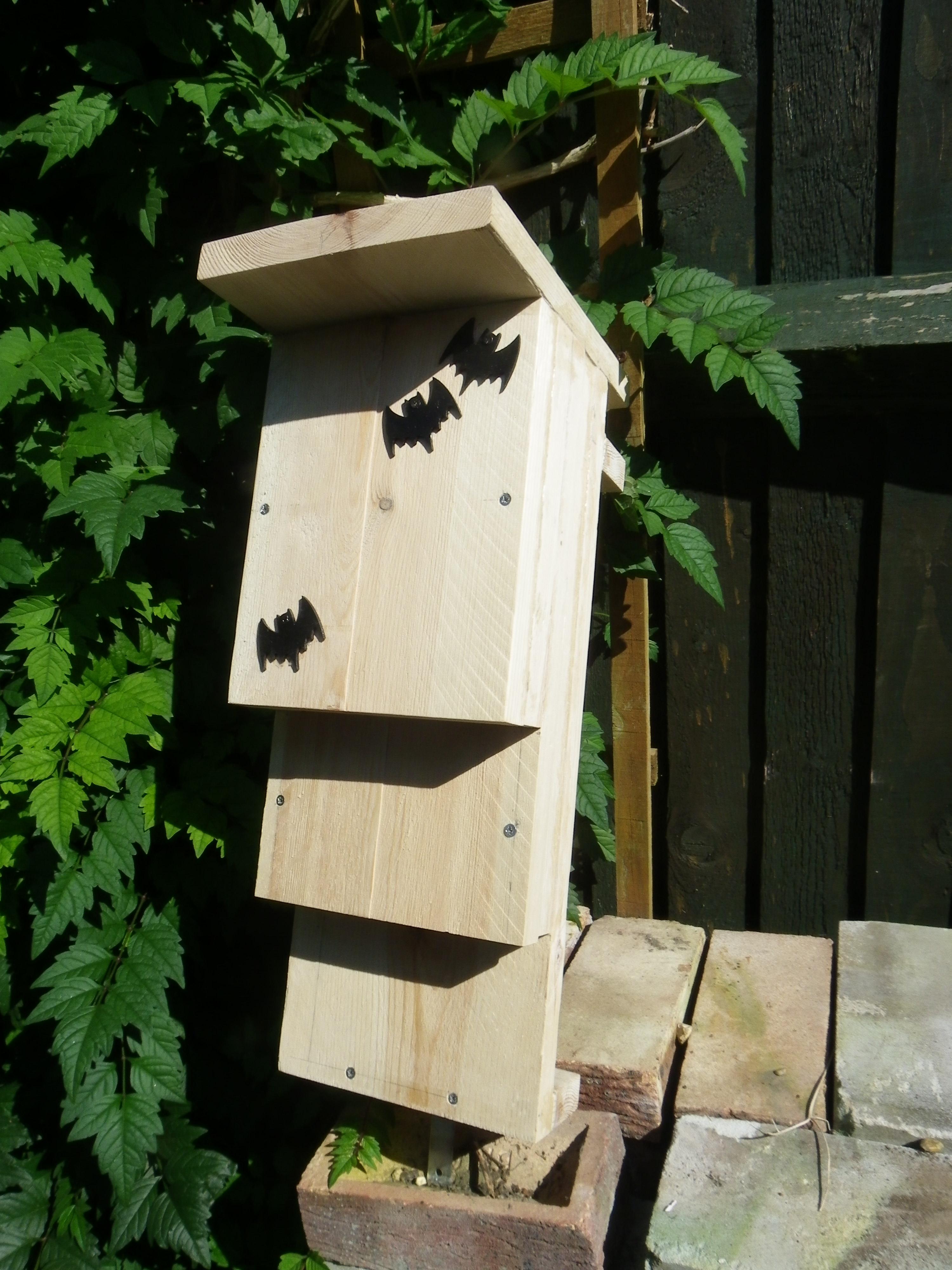 England Bat Boxes Serbian Animals Voice Sav