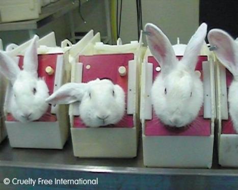 cfi-rabbits