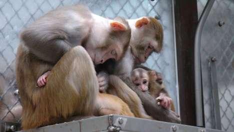 peta-primates