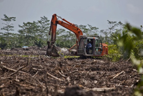 An excavator constructs a canal in recently cleared land in an oil palm concession owned by PT Andalan Sukses Makmur (PT ASMR) concession, a subsidiary of Bumitama Agro Ltd. The area is near Kumai Seberang village, next to Tanjung Puting National Park in Central Kalimantan.