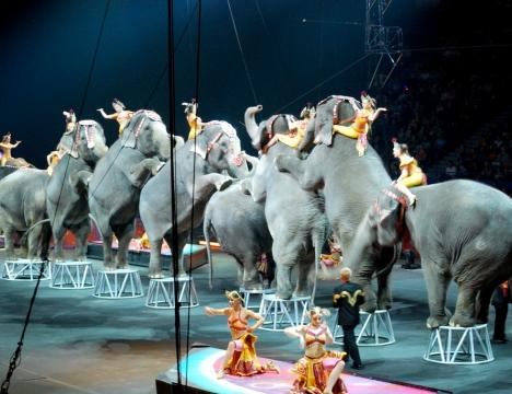 circus-elephants-standing
