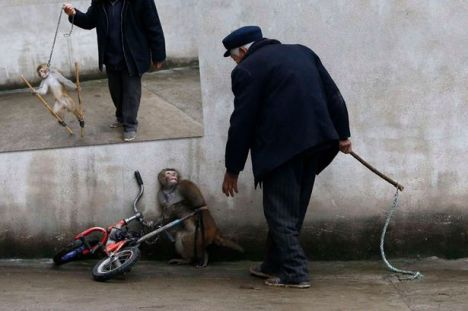 circus-monkey-chain-2