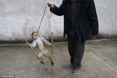 circus-monkey-chain