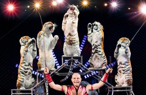 circus-tigers