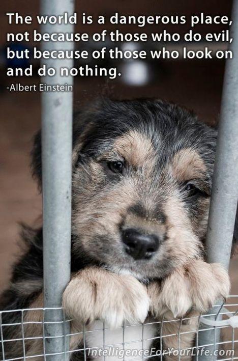 Sad homeless puppy waiting for adoption
