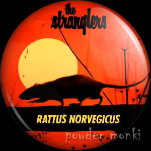 rattus-rat