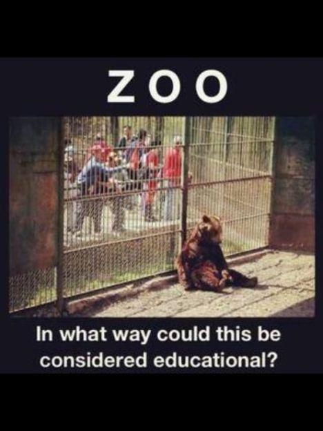 zoo-education