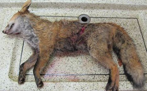 fox-post-mortem-onekind