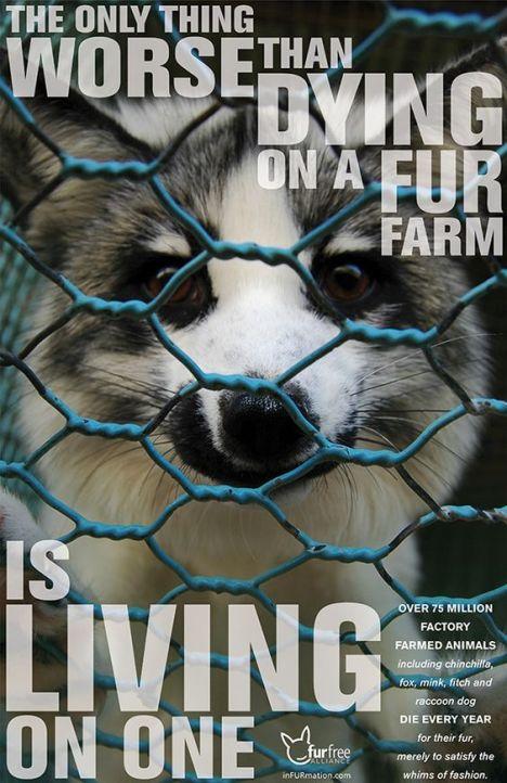 fur-farm