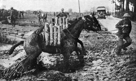 horse-1