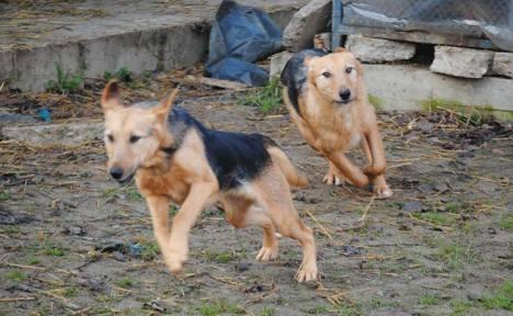 nov-dogs-1