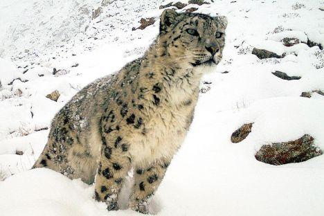 snow-lep1