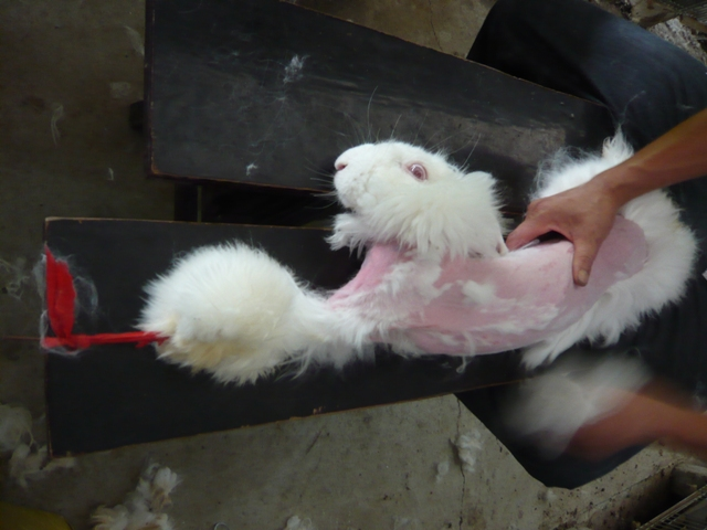 Urge Zulily to stop selling clothing made from Angora