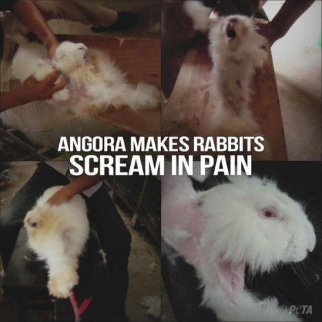 angorra-pain2