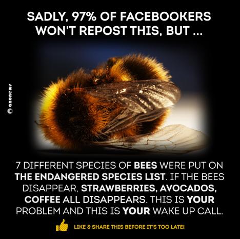 bee-warning