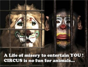 circus-is-no-fun-for-animals