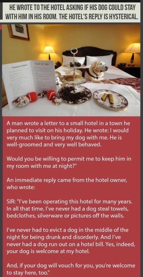 hotel-dog