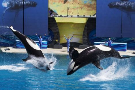 orca-perform-reuters
