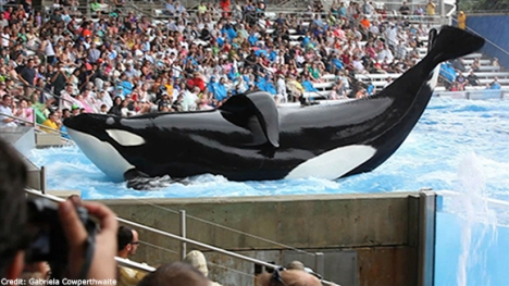 sea-world-kills-2