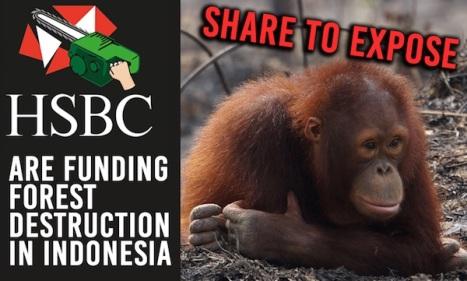 hsbc-destruction-indonesia