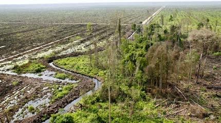 palm-oil-greenpeace-uk