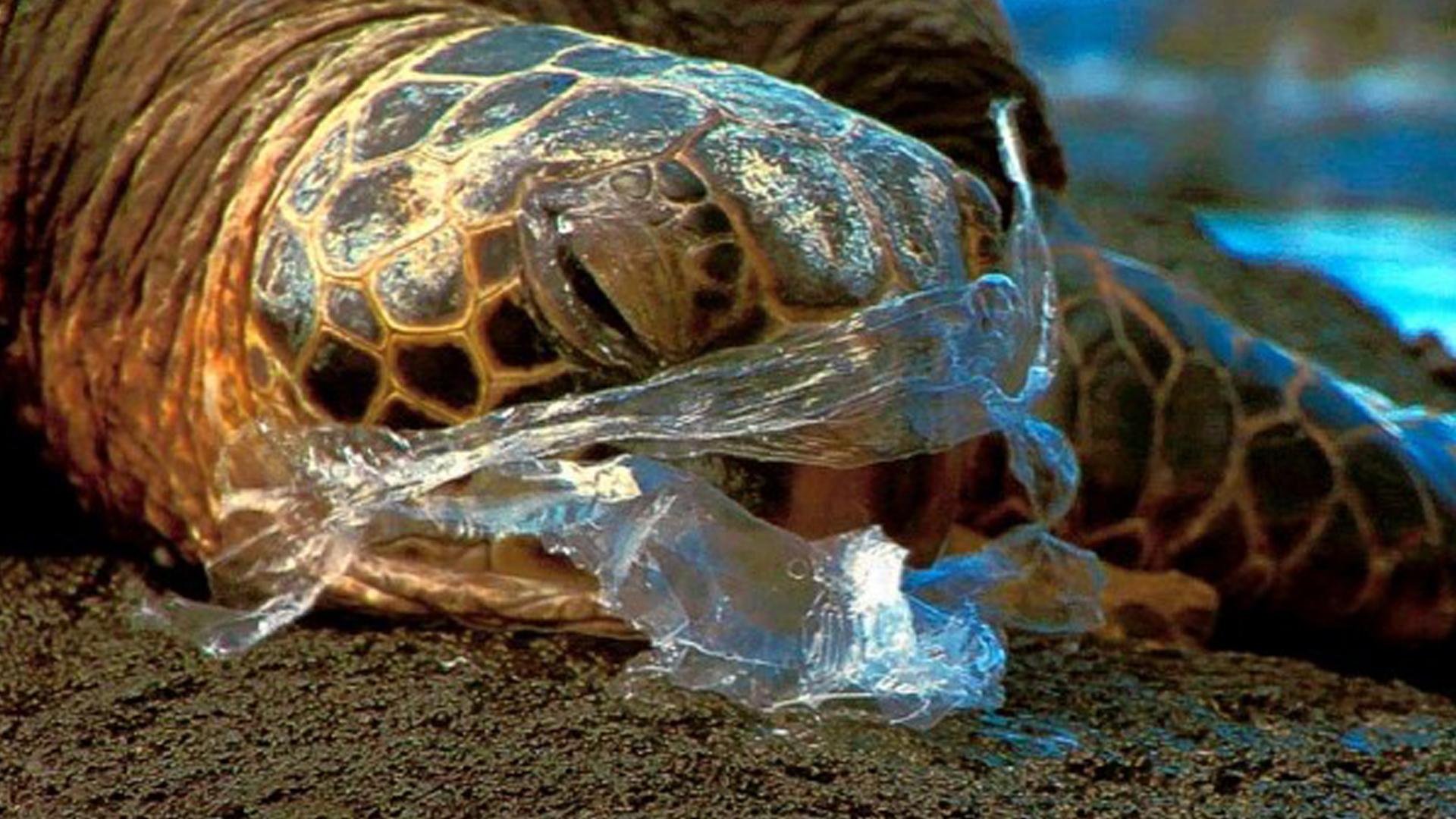 Sav On Bags >> Plastic Straws Are Killing Sea Wildlife – Take Action To ...