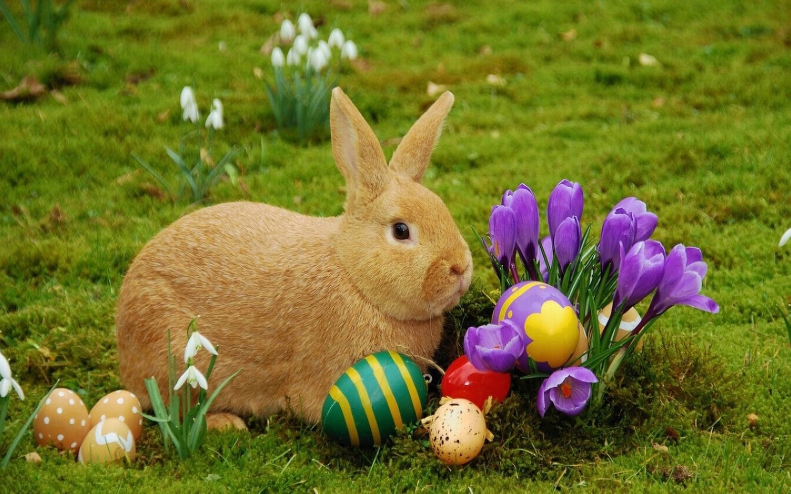 30/3/18 – Easter Mes...