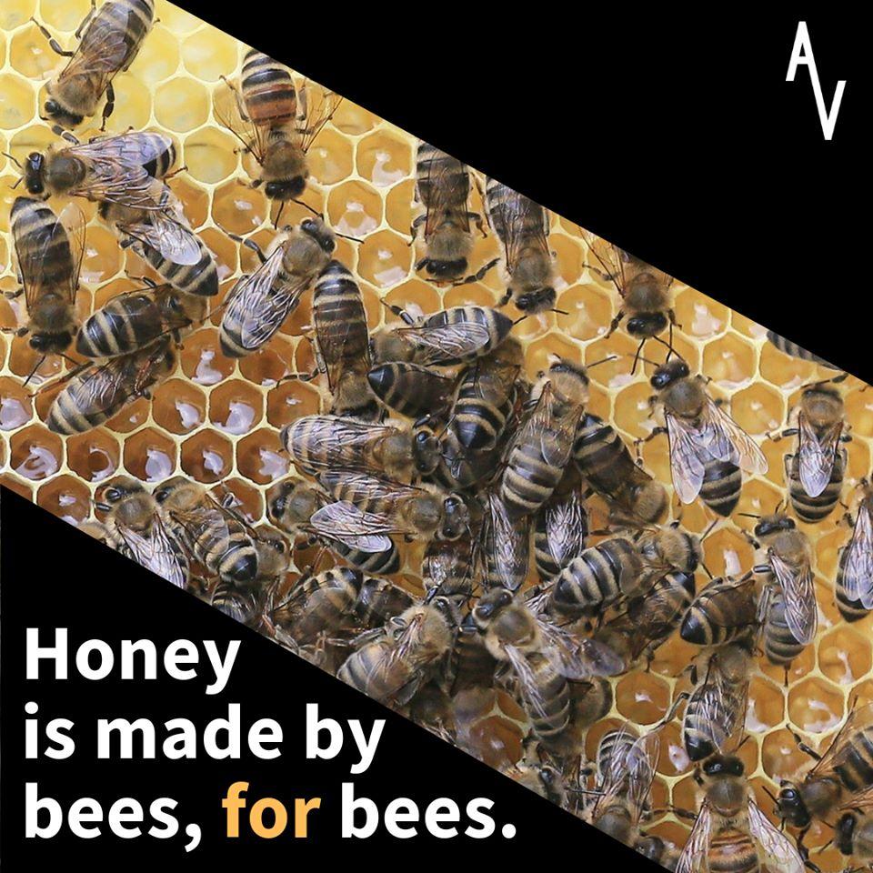 Whta Is Behind The Sweet Honey Serbian Animals Voice Sav