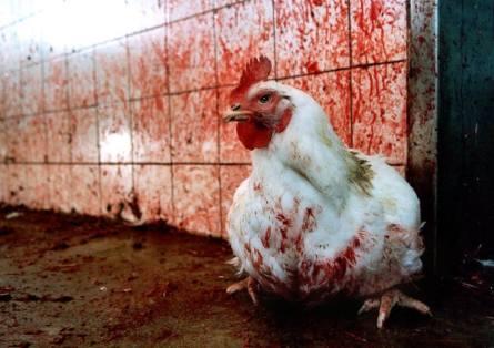 Huhn an blutiger Wandjpg
