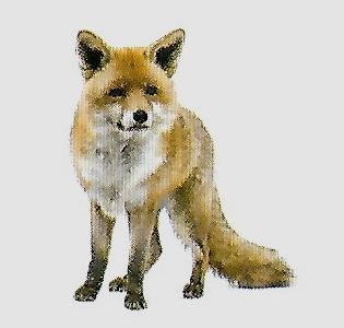 LACS Fox