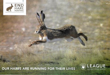 LACS Hare 1
